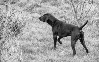 Pointer and Setter Natural Game Trials